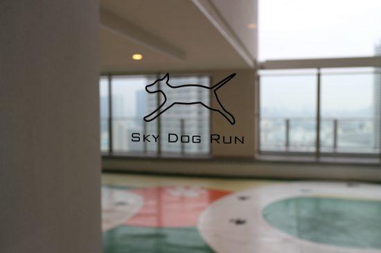 pts_sky_dog_run